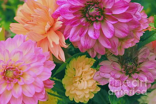 Dahlia Bouquet Pop Art by Dora Sofia Caputo Photographic Art and Design