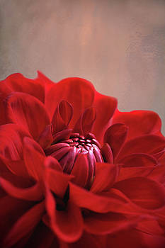 Dahlia Dalliance  by Marion Cullen
