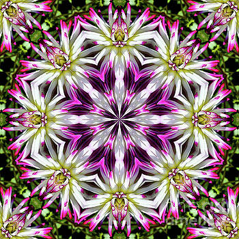 Dahlia Flower Circle by Smilin Eyes  Treasuress