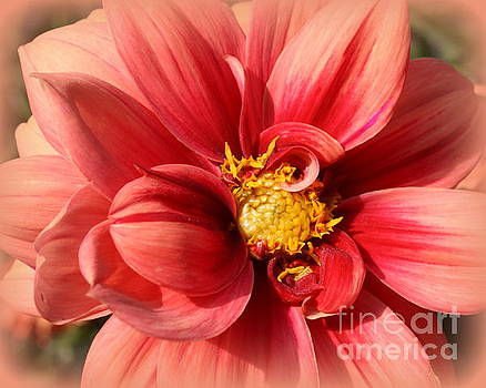 Dahlia Lovely in Coral by Dora Sofia Caputo Photographic Art and Design