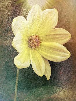 Dahlia by Lynn Bolt