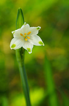 Dainty by Marilyn Peterson