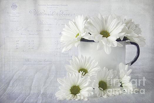 Daisies by Cindi Ressler
