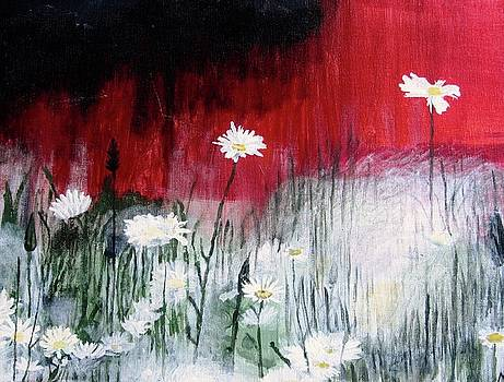 Daisies by Mary Ellen Frazee
