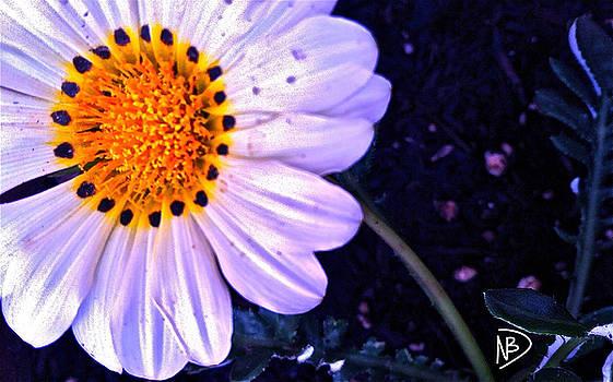 Daisy Dot Left by Nicole Dumond-Barry