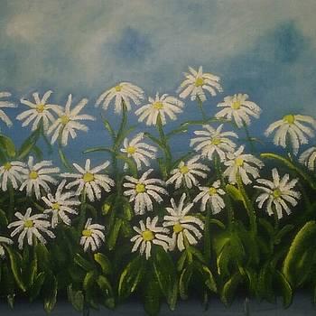 Daisy Field by Rebecca Jackson