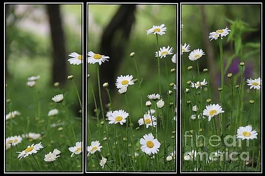 Daisy Triptych panel by Yumi Johnson