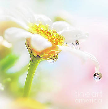 Daisy Water Drop Reflection by Peggy Franz