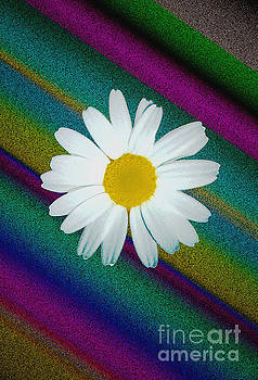 Daisy With Physchedelic Background by ImagesAsArt Photos And Graphics