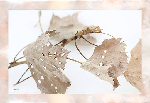 Dance of Lacy Winter Leaves in Snow by Gretchen Wrede