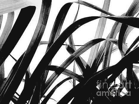 Dancing Bamboo black and white by Rebecca Harman