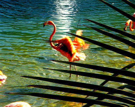 Dancing Flamingo by Yolanda Rodriguez