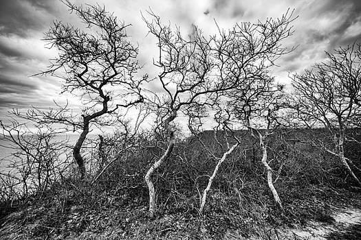 Dancing Trees by Kate Hannon