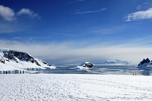 Danco Island, Antarctica 1 by Lilach Weiss