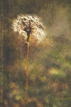 Dandelion by Arisha Singh