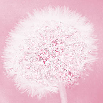 Dandelion Dreams in Pink by Emily Kay