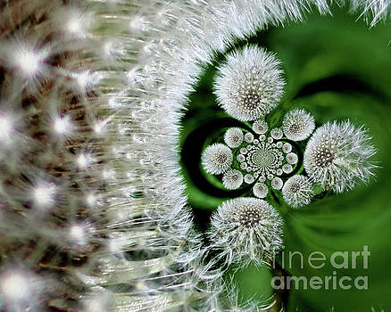 Dandelion Fluff Abstract by Smilin Eyes  Treasures