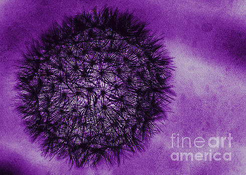 Dandelion in Goth by Emily Kay