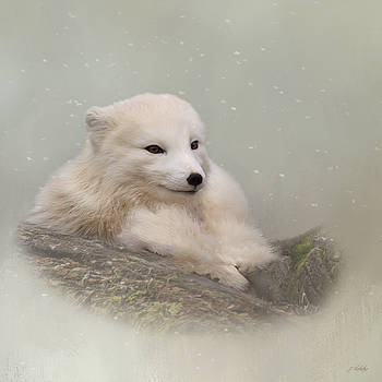 Daring The Soul - Arctic Fox Art by Jordan Blackstone