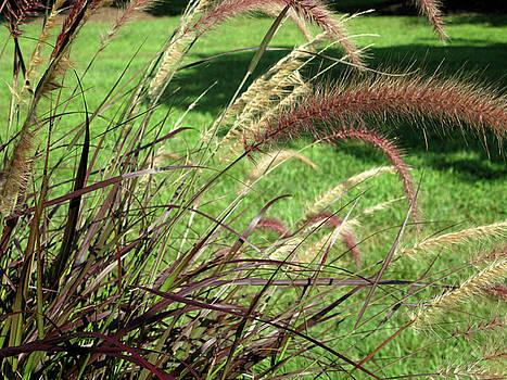 Dark Feather Grass by Michele Wilson