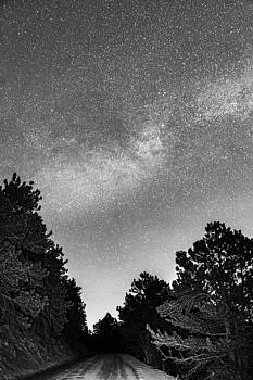 James BO Insogna - Dark Forest Night Light