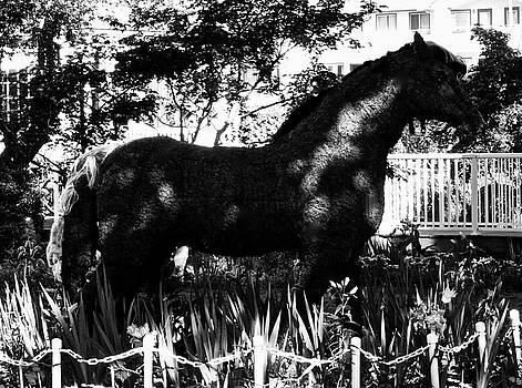 Dark Horse by Brian Sereda