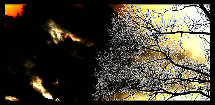 Dark Meets Light by Susanne Still