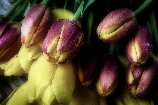 Dark Moody Tulips by Garry Gay