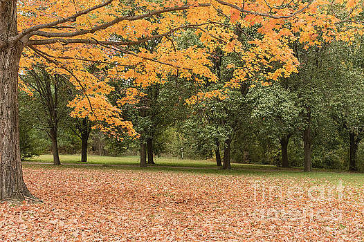 Dark Orange Woods by Ava Reaves