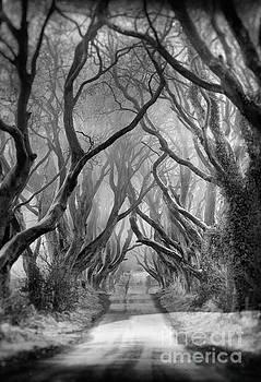 Dark by Pawel Klarecki