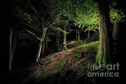 Dark Wood by Martin Williams