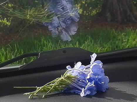 Dashboard in Blue by Ruthann Carlson