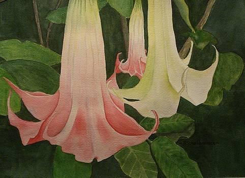 Datura Flower by Bonnie Schallermeir