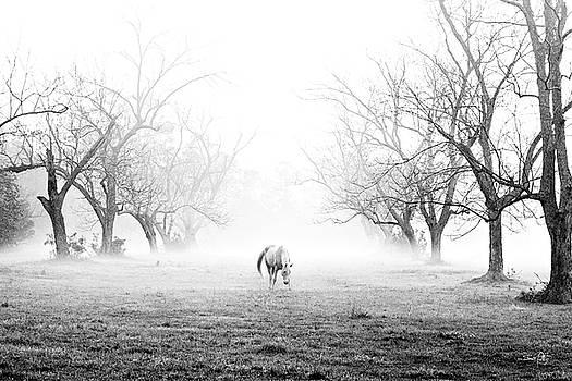 Scott Pellegrin - Daybreak