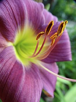Daylilies in Summer by Rebecca Overton