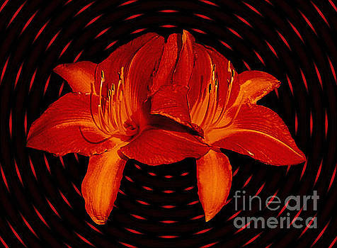 Daylilys In Orange Light Streaks by ImagesAsArt Photos And Graphics