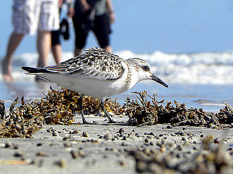 Daytona Beach Surf 001 by Chris Mercer