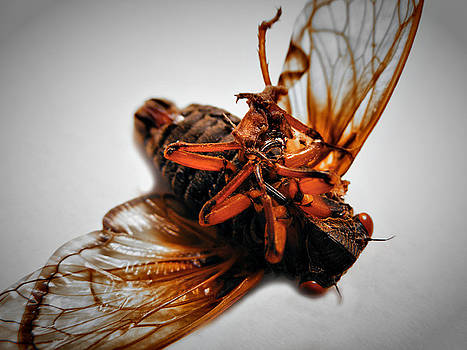 Dead Cicada by Hunter Productions