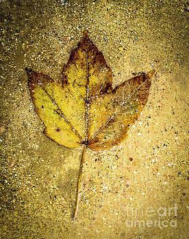 BERNARD JAUBERT - Dead leaf