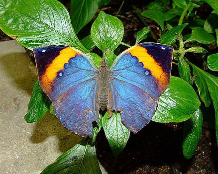 Dead Leaf Butterfly by Rex E Ater