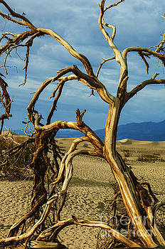 Dead tree in Death Valley 12 by Micah May