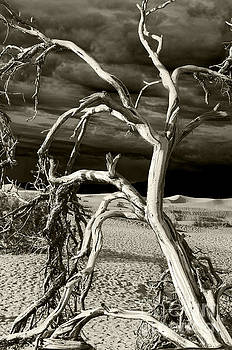 Dead tree in Death Valley 13 by Micah May