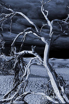 Dead tree in Death Valley 14 by Micah May