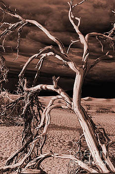 Dead tree in Death Valley 15 by Micah May