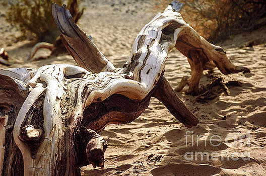 Dead tree in Death Valley 16 by Micah May