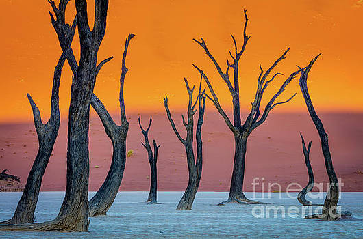 Deadvlei Abstract by Inge Johnsson