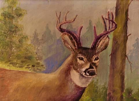 Dear Deer by Anne-elizabeth Whiteway