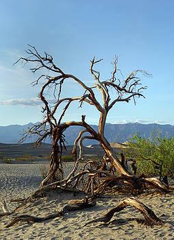 Death Valley Landscape by Gordon Beck