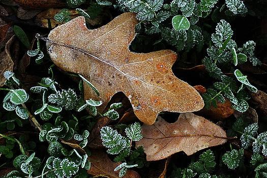 December Frost by Bill Morgenstern