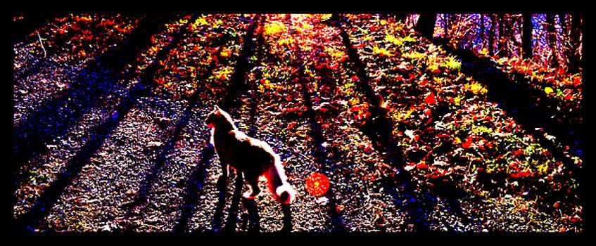 December Walk in the Blue Ridge by Susanne Still